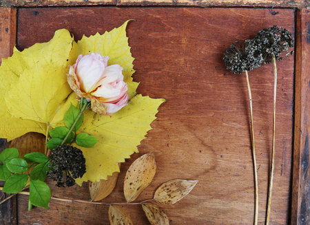Garden flowers and leaves over wooden table background. Backdrop with copy space 版權商用圖片