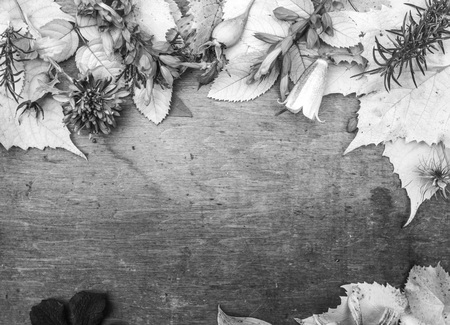 Monochrome photo with autumn flowers and leaves on wooden background 版權商用圖片