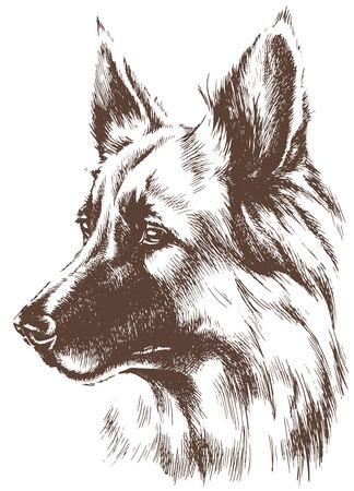 シェパード犬のスケッチ