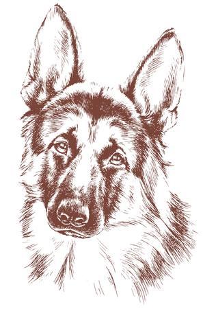 furry animals: bosquejo del perro pastor de vectores Vectores