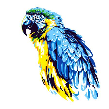黄-青オウム ara ベクトル