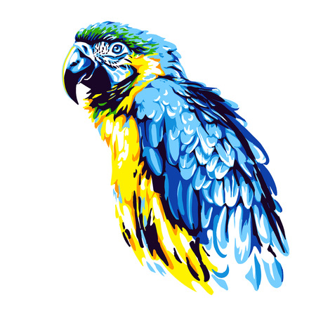 Yellow-blue parrot ara vector Ilustração
