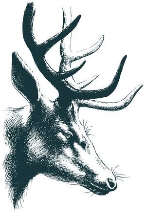 buch: Deer vector sketch