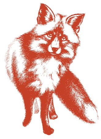 interested: Little fox vector sketch Illustration
