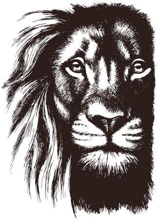 strenght: Lion head vector Illustration