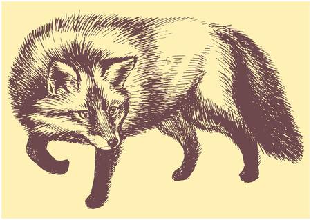 Fox hunter vecrot sketch