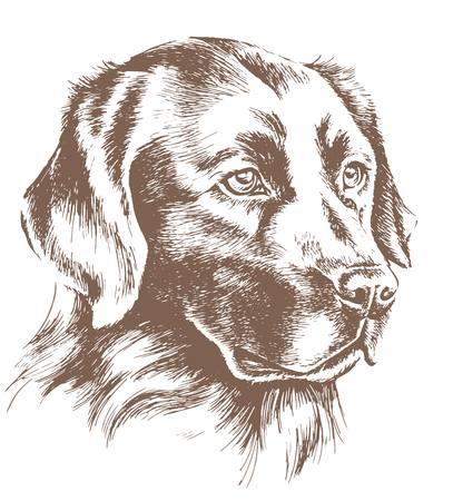labrador: labrador head vector sketch
