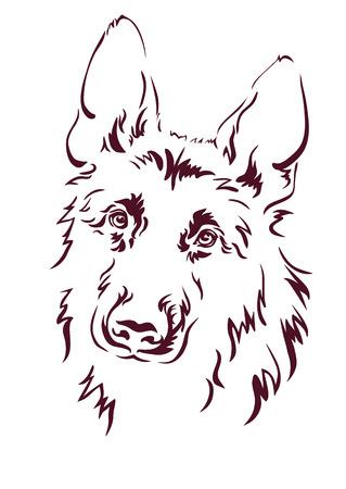 pastor: Pastor alemán ilustración vectorial Vectores