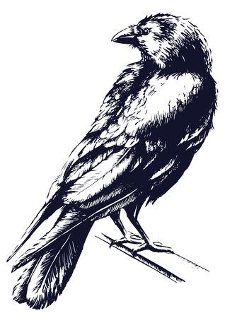 漆黒ブラック ベクトル  イラスト・ベクター素材