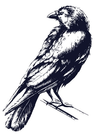 talons: Black raven vector