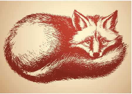 眠い fox ベクター スケッチ
