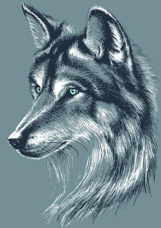 Wolf head vector sketch