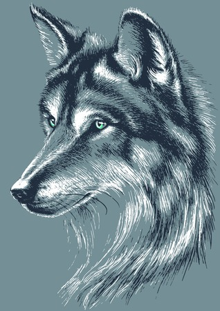 wolves: Wolf head vector sketch