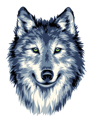 Wolf head vector illustration 版權商用圖片 - 43839005