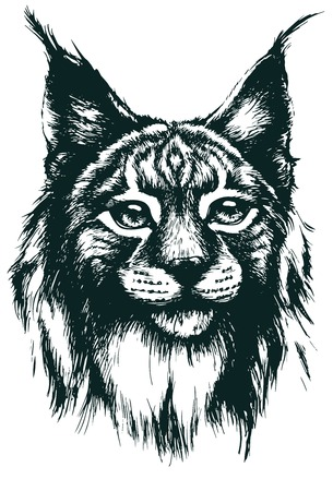 Lynx ベクトル イラスト