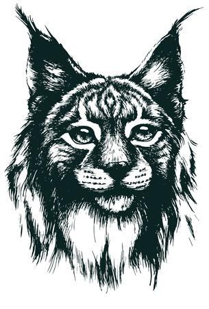 lince: Lynx ilustración vectorial Vectores