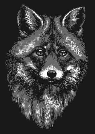 Black and white fox sketch