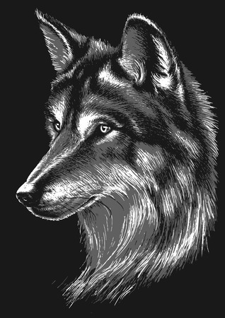 interested: Black and white wolf head Illustration
