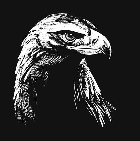 hand drawn wings: Black and white falcon sketch