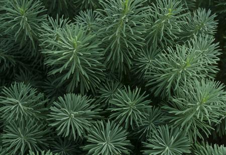 緑の草 写真素材