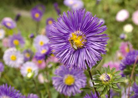 美しい花に蜂
