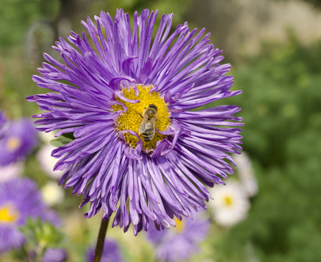 Bee on the beautiful flower