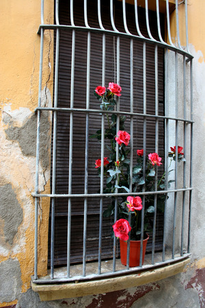 metal grate: Metal Grate Window With Flowers. Old window in an ancient town Blanes, Catalonia