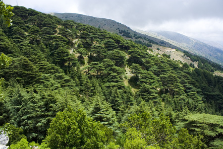 extent: Cedar forest in Lebanon. The mountains of Lebanon were once shaded by thick cedar forests and the tree is the symbol of the country. After centuries of persistent deforestation, the extent of these forests has been markedly reduced.