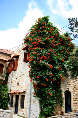 huge tree: Amazing old House Entrance with a huge tree, located in old lebanese village Dibbiye, Mount Lebanon
