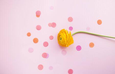 Schöner frischer einzelner gelber Ranunkel auf pastellrosa Hintergrund mit Konfetti. Ansicht von oben.