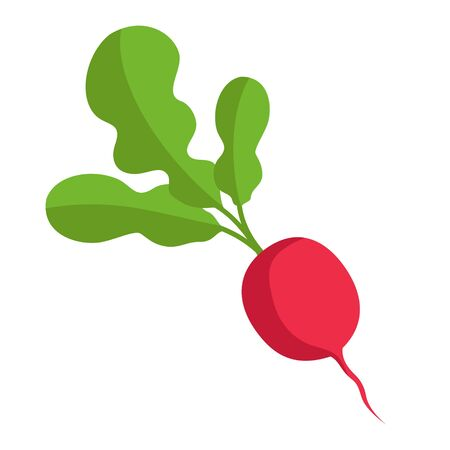 Red radish with green tops. Illustration of a vegetable on a white background in the flat style Ilustração
