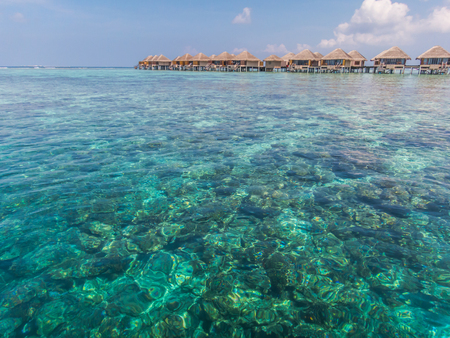 Beautiful landscape with clear green water Imagens - 51128790