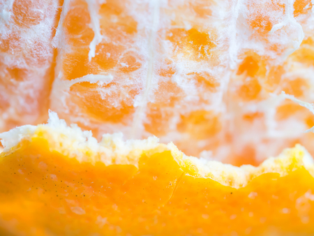 closeup of orange pulp and peel stock photo picture and royalty