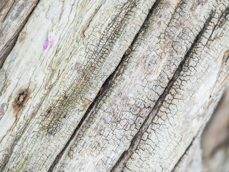 gray texture: Abstract stripes pattern and cracked wood texture. Stock Photo