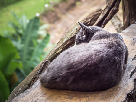 Black cat is sleeping on the wooden chair with blurry nature background. Stock Photo
