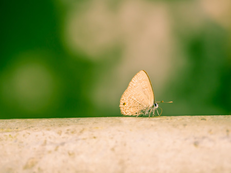 Cross processed tone of brown wings butterfly on steel pipeline or fence.
