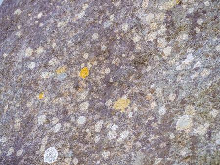 Abstract mouldy concrete or cement wall. Stock Photo