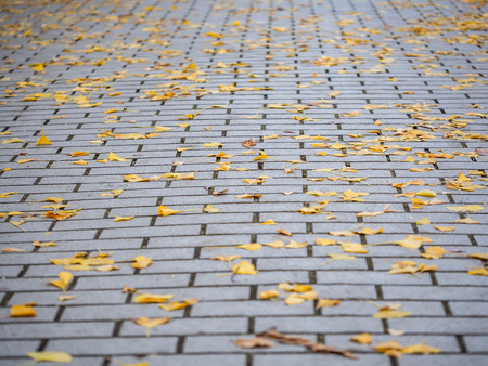 Dry vivid yellow leaves fall on the cement or concrete tiles floor at the park in autumn season. Stockfoto