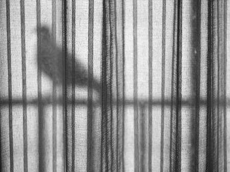 Black and white tone of vertical striped window curtain texture and pattern with blurry bird shape hold on the horizontal row. Imagens - 141282818