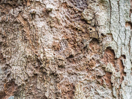 Abstract nature background of rough texture and pattern of tree.