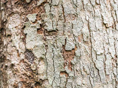 Abstract nature background of rough, cracked, barked texture and pattern of tree. Imagens