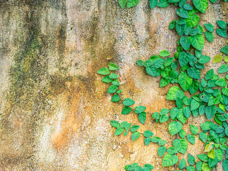 Abstract nature background of old, ancient concrete or cement texture with fresh small green leaves. Imagens