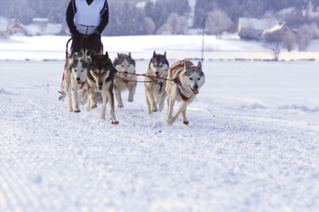 mushing: Group of sled dogs running through lonely winter landscape