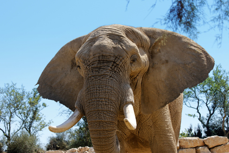 lonley brown elephant in dessert front view Stock Photo