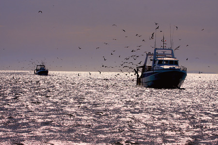 professional fisherboat many seagulls come back in the harbor Stock Photo