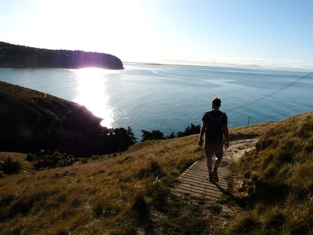 Hiker on Godley Head Trail, New Zealand photo