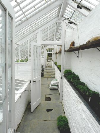 conservatory: Interior of a traditional greenhouse or conservatory