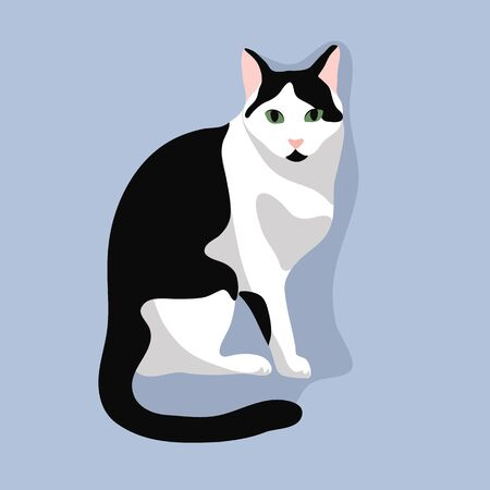 Cute cat sit. Black and white cat with green eyes  isolated on blue background. Stock vector illustration in flat cartoon style.