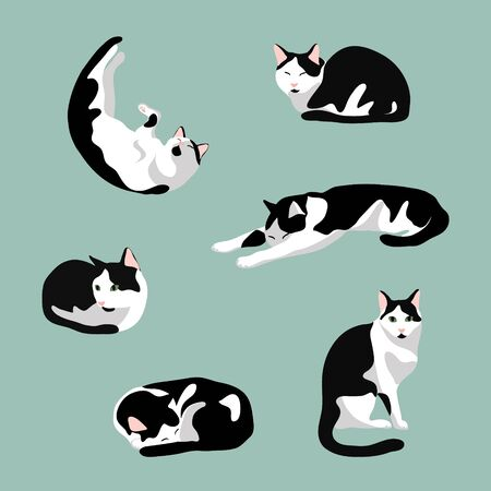 Set of cute cat in various poses: sleeping, sit, stretching. Black and white cat with green eyes  isolated on blue  background. Stock vector illustration in flat cartoon style. Illustration