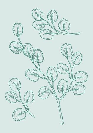Set of eucalyptus branches on green background. Hand drawn botanical illustration with contour lines in vector. Monochrome floral elements fot textile and wallpaper.